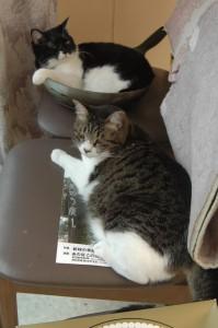 窓際の椅子の上で仲良く寝ているさくらとちびクロ